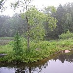 Photo: View of the water and trees at Haven House
