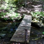 Photo: View of the stream at Peters Cove